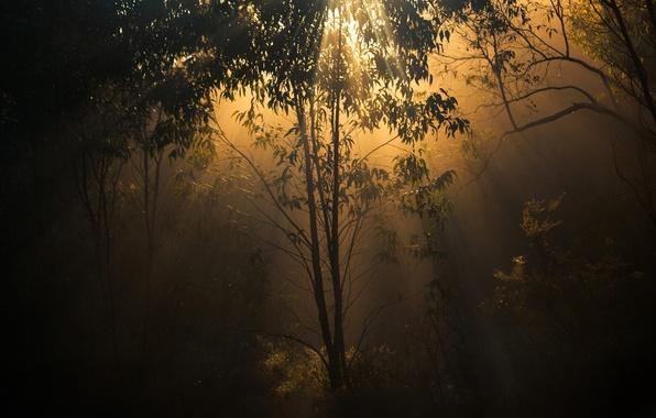 Картинка лес, свет, деревья, природа, сумерки