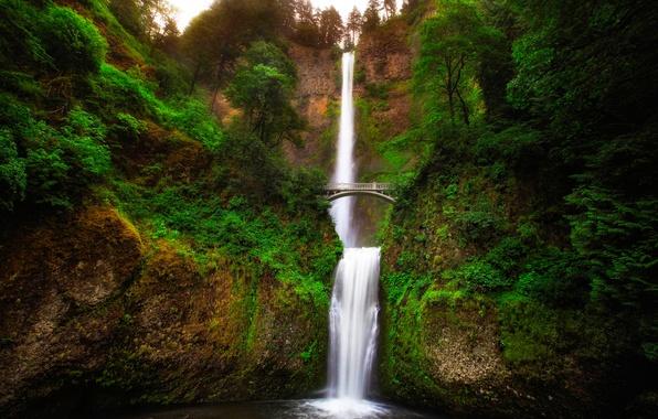 Картинка зелень, деревья, пейзаж, мост, скала, река, водопад, поток, Орегон, ущелье, USA, Oregon, Малтнома, Multnomah
