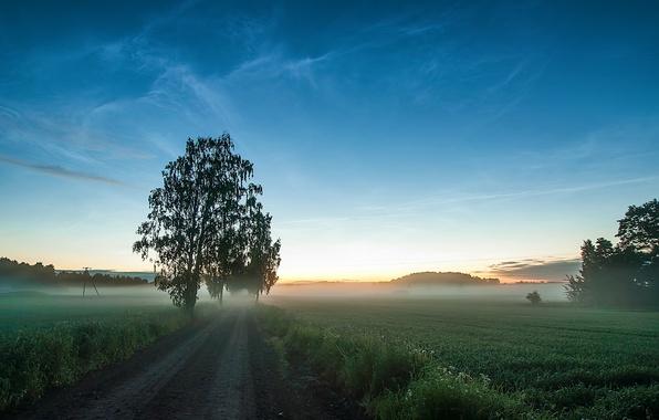 Картинка дорога, поле, трава, деревья, туман