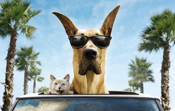 Картинка машина, кот, деревья, улыбка, пальмы, ветер, собака, очки, дог, мармадюк, Marmaduke