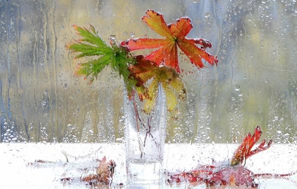 Картинка капли, цветы, дождь, окно, ваза, натюрморт