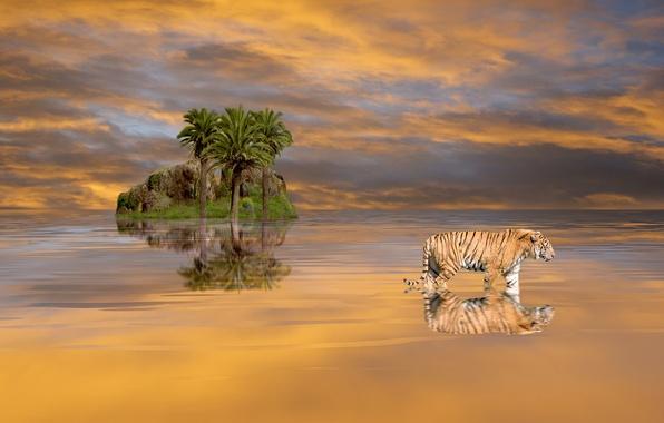Картинка небо, вода, облака, пейзаж, природа, тигр, скала, пальмы