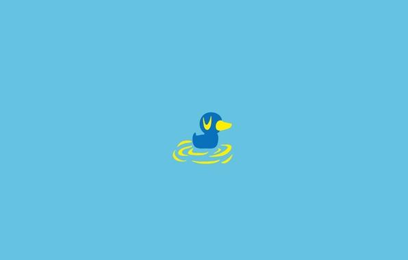 Картинка вода, птица, утка, утенок