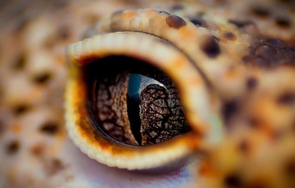 Картинка глаз, крокодил, веко