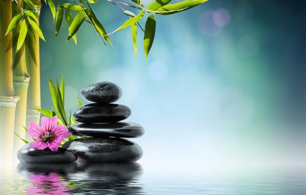 Картинка цветок, вода, камни, бамбук, flower, water, orchid, stones, reflection, bamboo, spa, zen