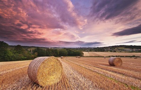 Картинка поле, лето, небо, облака, вечер, сено, солома, роллы