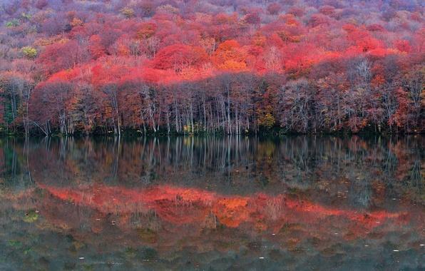 Картинка осень, лес, деревья, озеро, отражение, склон, багрянец