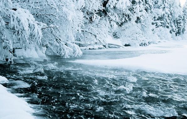 Картинка зима, лес, вода, снег, природа, река, поток