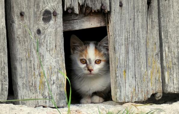 Картинка взгляд, забор, мордочка, котёнок