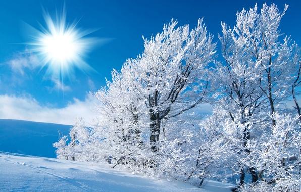 Картинка зима, иней, поле, небо, солнце, свет, снег, деревья, следы, мороз