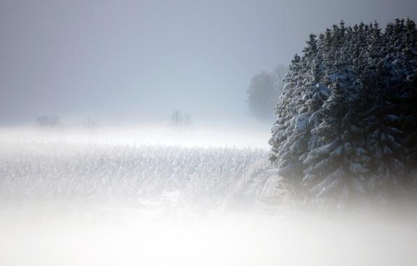 Картинка снег, пейзаж, туман