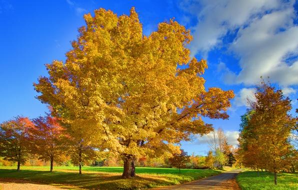 Картинка дорога, осень, небо, листья, облака, природа, парк, дерево