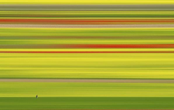 Картинка поле, человек, цвет, минимализм