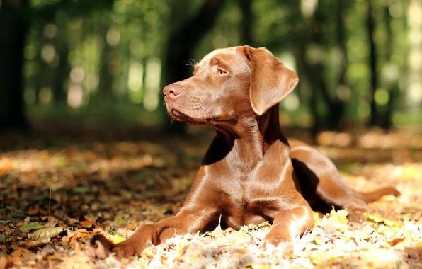 Картинка взгляд, свет, природа, собака