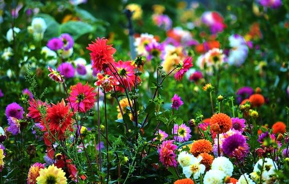 Картинка листья, цветы, лепестки, сад, стебель, луг