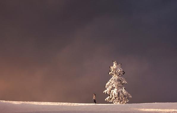 Картинка зима, пейзаж, дерево, человек