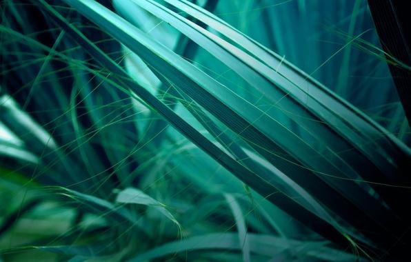 Картинка листья, зеленый