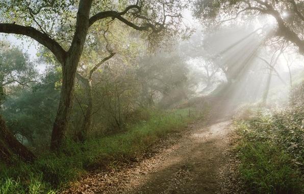 Картинка лес, солнце, лучи, тропинка
