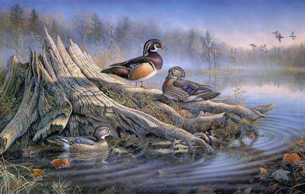 Картинка осень, лес, вода, птицы, туман, озеро, пень, утки, живопись, искусство, Sam Timm, осенние листья, животный …