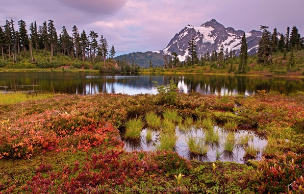 Картинка небо, трава, облака, деревья, пейзаж, цветы, горы, озеро, болото