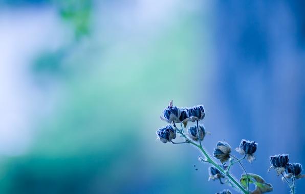 Картинка цветок, голубой, колокольчик, flower, texture, blue