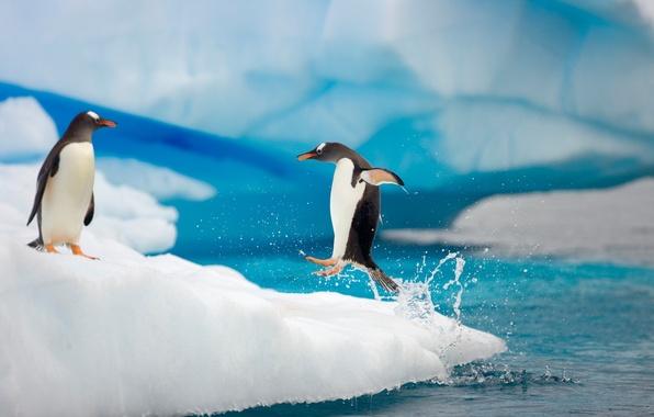 Картинка капли, брызги, движение, океан, прыжок, лёд, лапы, пингвины, пара, полёт, льдина