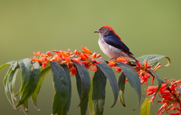 Картинка листья, цветы, птица, растение, ветка