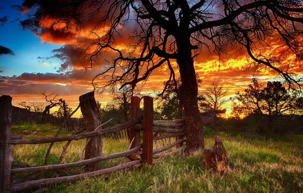 Картинка закат, дерево, забор