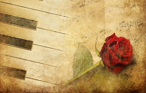 Картинка цветок, роза, красная роза, фортепиано, красная, vintage, музыку
