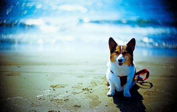 Картинка пляж, друг, океан, собака, боке