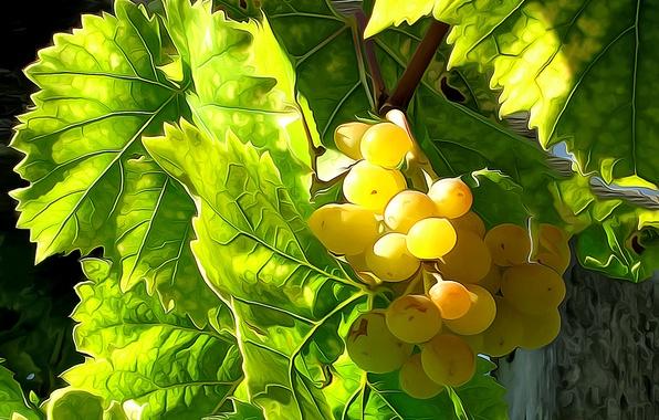 Фото обои листья, линии, виноград, урожай, краски, ягоды