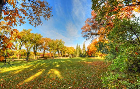 Картинка осень, небо, трава, деревья, парк, тень, скамья
