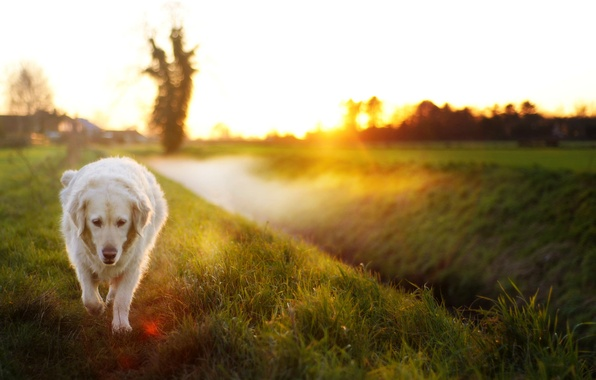 Картинка свет, друг, собака, утро