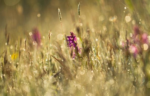 Картинка лето, трава, цветы, роса, блики, луг