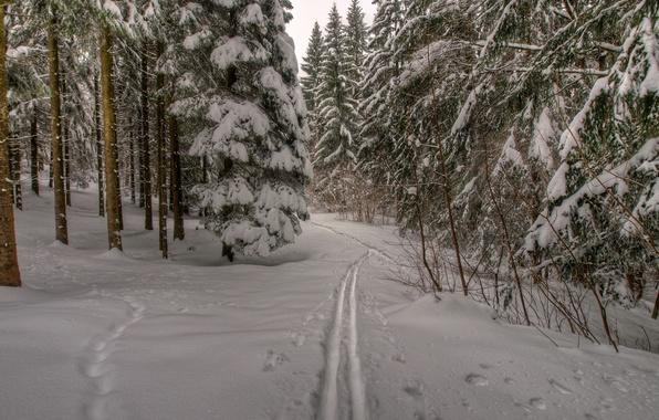 Картинка зима, лес, снег, деревья, следы, природа, тропа, мороз, forest, Nature, trees, winter, snow, path, frost