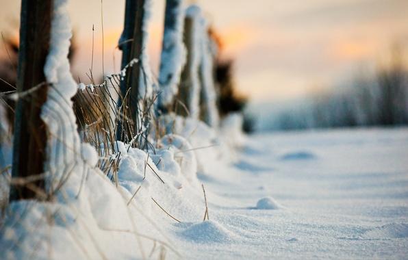 Картинка зима, макро, снег, забор, вечер