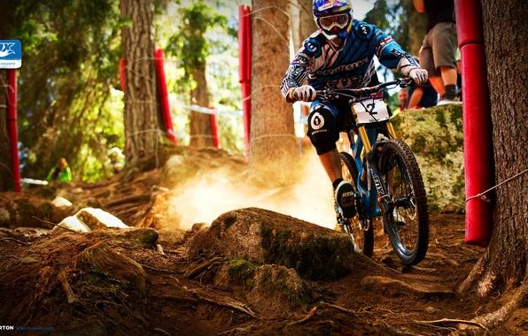 Картинка лес, скорость, пыль, Байк, Маунтин байк, Bike