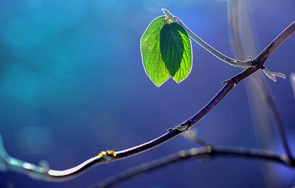 Фото обои макро, листва, блики, ветка