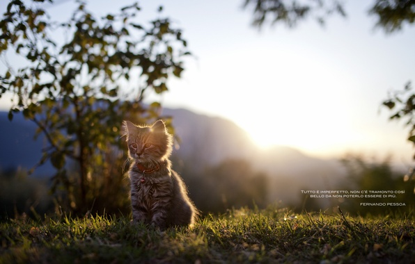 Картинка кошка, трава, свет, природа, надпись, котёнок, слова, цытата, португальский