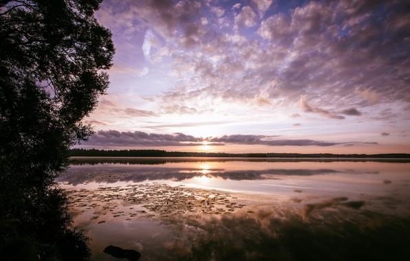 Картинка лес, озеро, отражение, рассвет, утро