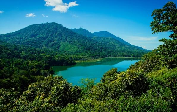 Картинка лес, горы, озеро, Бали, Индонезия, Bali, Indonesia