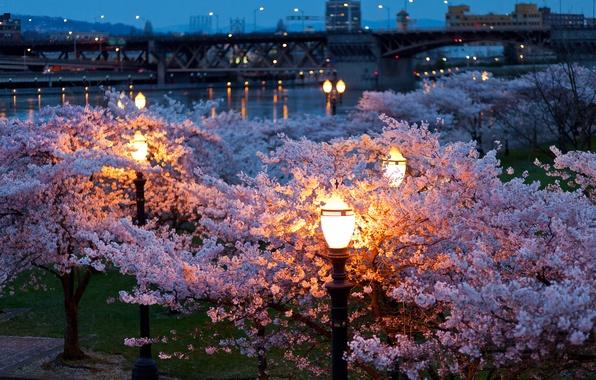 Картинка деревья, ночь, город, огни, парк, река, цвет, весна, вечер, фонари, мосты, цветут
