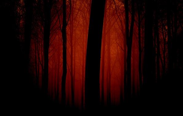 Картинка лес, деревья, пейзаж, природа, вечер