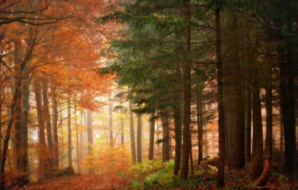 Картинка осень, природа, красота, утро, Деревья, Лес