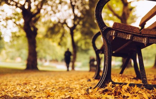 Картинка осень, листья, деревья, скамейка, природа, парк, желтые, силуэт, лавочка, лавка, скамья