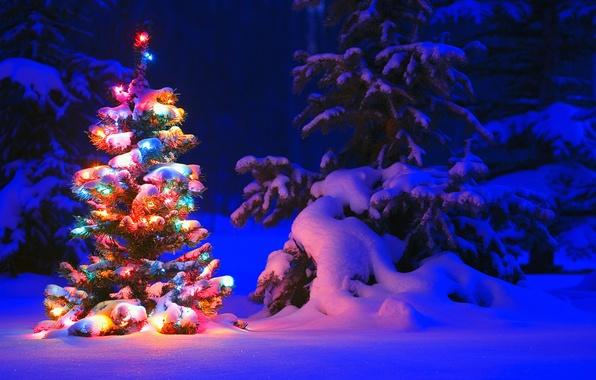 Картинка зима, свет, снег, деревья, ночь, lights, огни, дерево, елка, ель, forest, Snow, winter, tree, герлянда