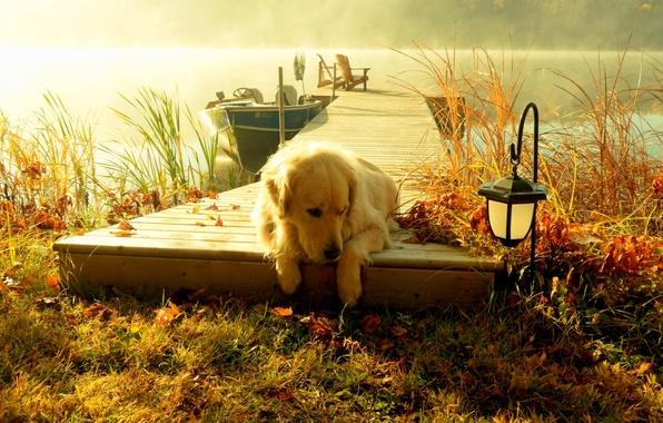 Картинка лес, небо, трава, вода, пейзаж, закат, природа, озеро, лодка, вид, собака, фонарь, grass, forest, sky, …
