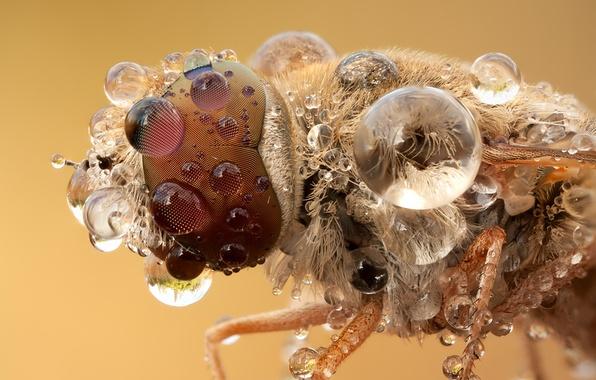 Картинка water, macro, insect
