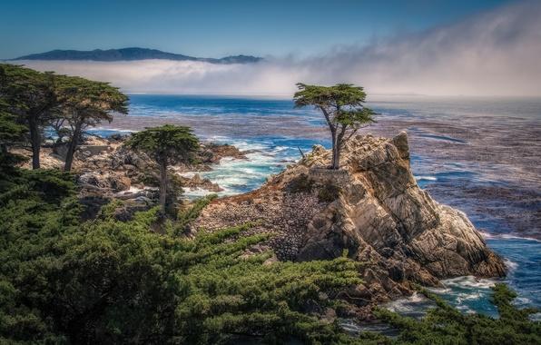 Картинка деревья, скала, побережье, Калифорния, залив, California, кипарисы, Pebble Beach, Одинокий кипарис, The Lone Cypress, 17-mile …