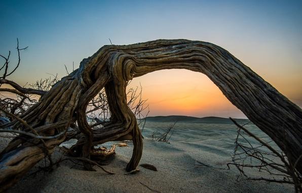 Картинка песок, пляж, закат, дерево, пустыня